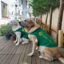"therapy dogs ""Poka and Luka"""