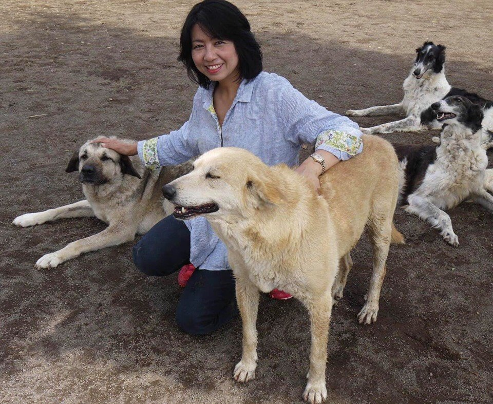 Tarcin&Tilki~turned to therapy dog from streetdog