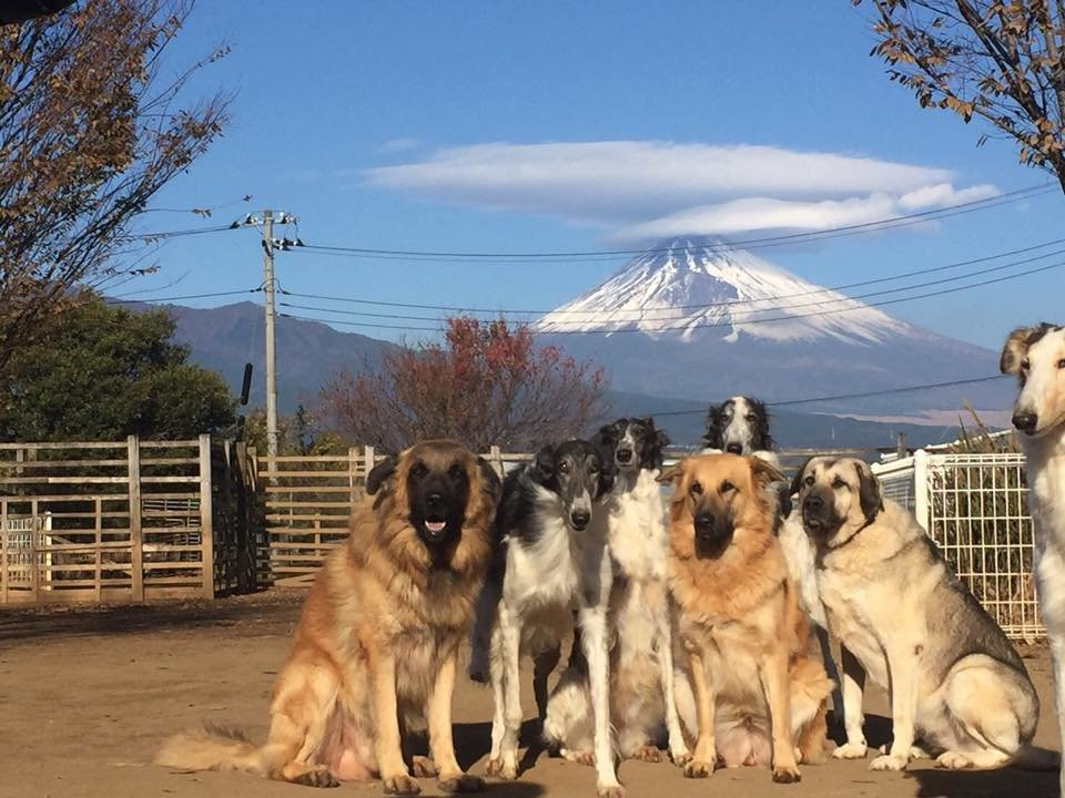 Most Effective Training For Large Dogs