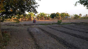 Relaxing at MRICRH's agricultural site