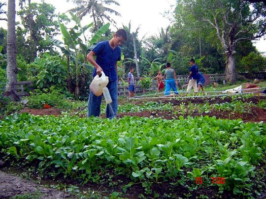 MRICRH's agricultural site