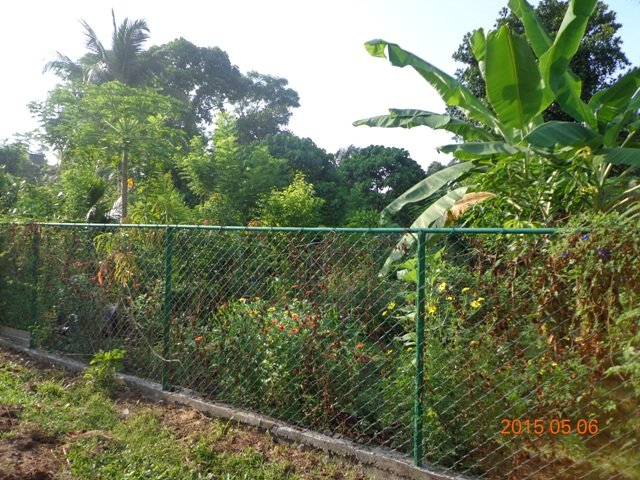 Support an Eco-Garden for Urban Youth in Sri Lanka