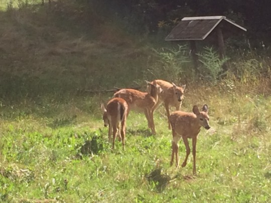 Everything is new the day the fawns arrive