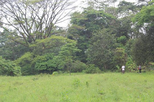 Planting site 2