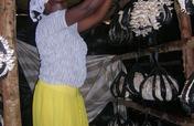 Support Sarah's mushroom project in Uganda