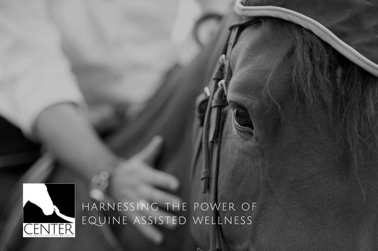 Help Harness The Power Of Equine Assisted Wellness