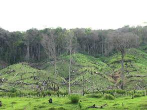 Deforestation in San Martin