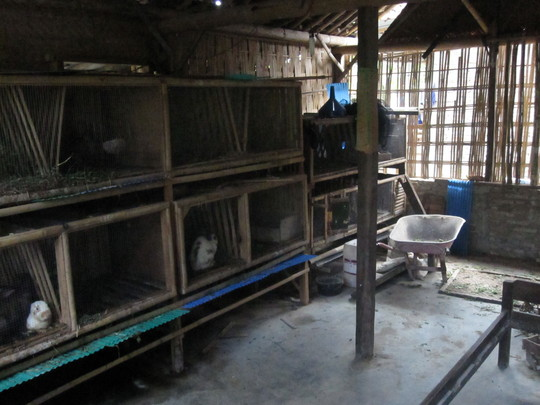 Rabbit rearing in the area meant for teaching