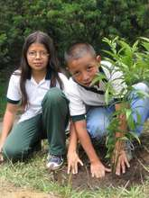 Children Plant Trees (2005)