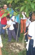 Planting Explanation (2007)