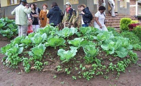 Help Rwandan women learn to farm, support families