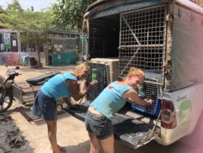 Loading dogs going to forever homes in the Norway
