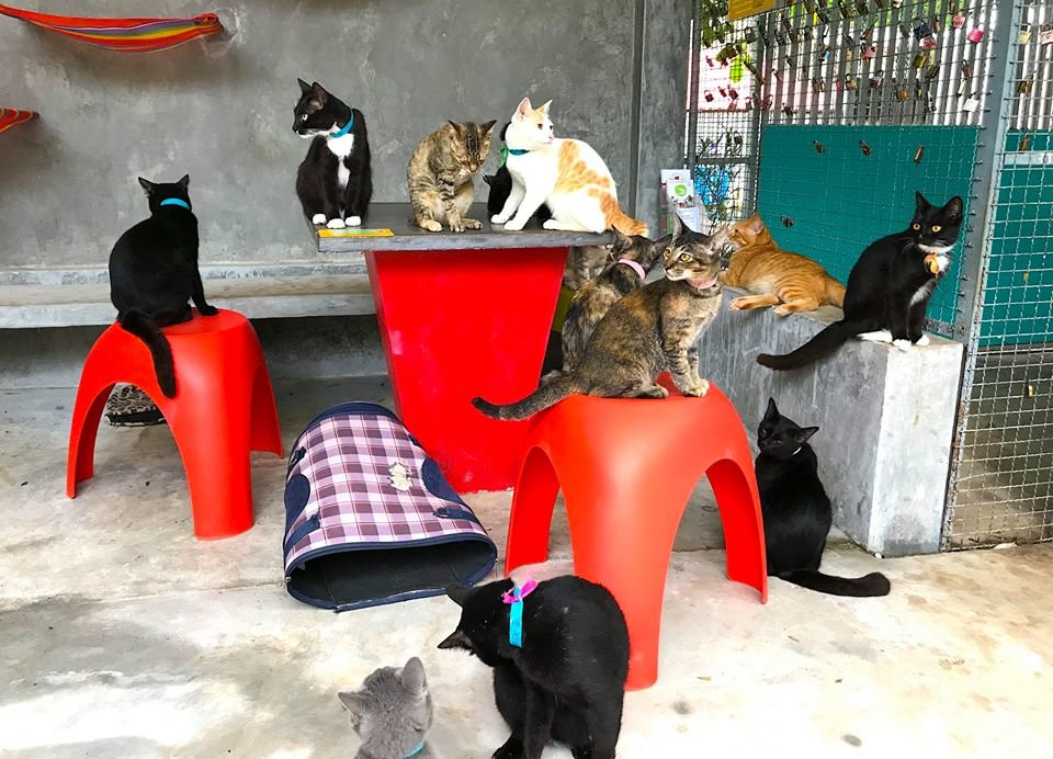 Rescue chats chilling in Kitty City