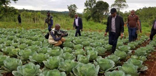 The Govnor in the Cabbage  experimental farm