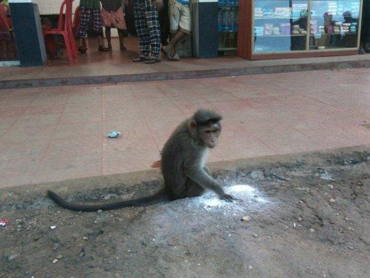 Help rescue wild animals in India