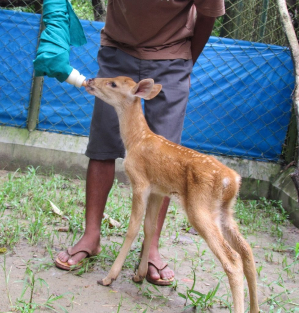 Help rescue wild animals and birds in India