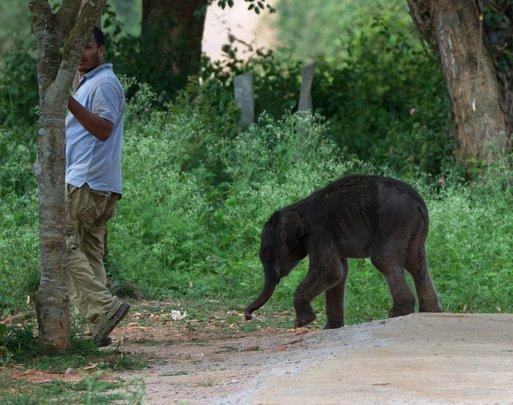 Rescued Elephant Calf follows our Veterinarian