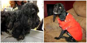 Blackie's matted fur had caused his skin to tear