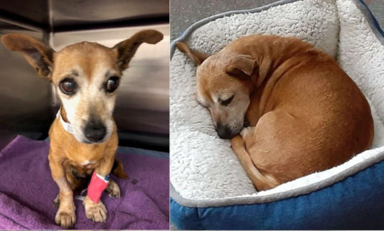 Blossom was abandoned at age 12, sick and deaf.