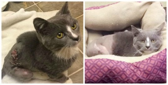 Frankie immediately after treatment (left) and now