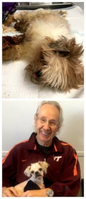 Once matted (top), Freddy is now happily adopted!