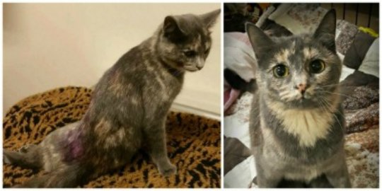 Suzie Q when she was found (left) and today