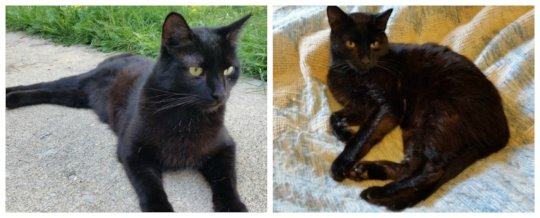Wayne with injured hind legs (left) and today