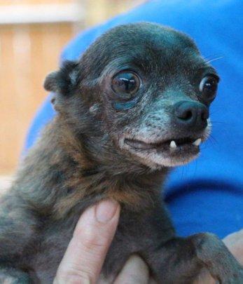 Elderly shelter dog transported to Zeus' Rescues