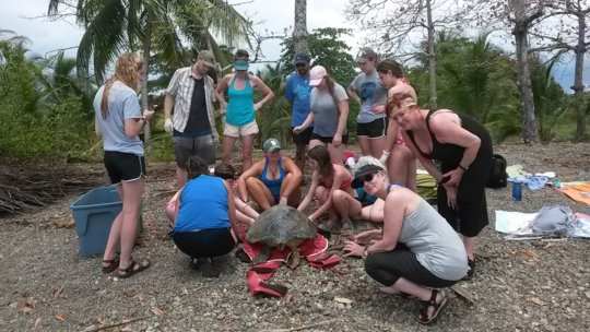 Global Giving donors with a green turtle