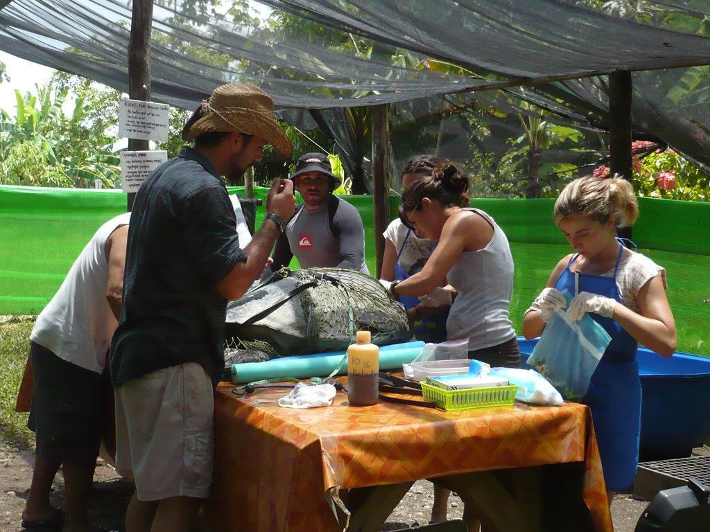 Provide Rehab Care for Sea Turtles in Osa