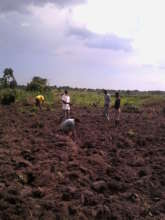 Installation of the new tree farm in Iganga