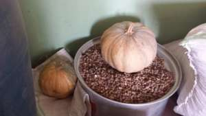 Pumpkins and Ground nuts