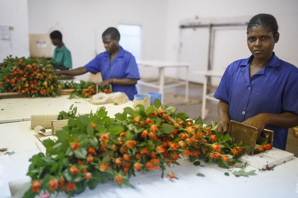 A seat at the table for 80 producers in Swaziland