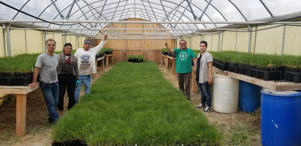 30,000 trees in the greenhouse before planting!