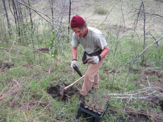 Community reforestation at Pine Ridge