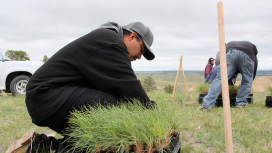Planting trees on Pine Ridge