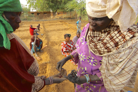 Women Distributing Seeds.