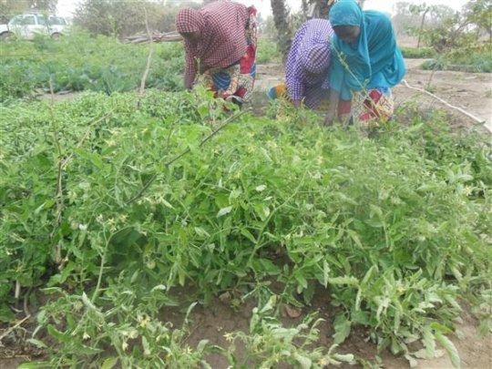 Women working in the garden.