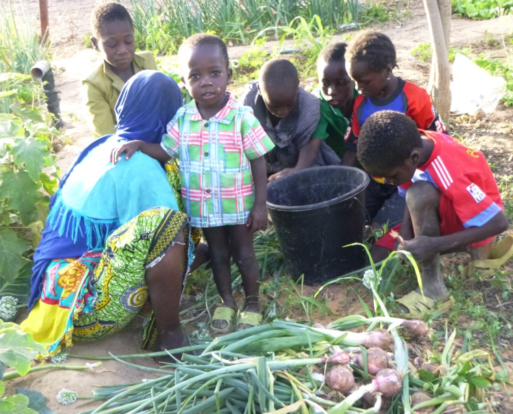 Women's Community Gardens in Niger