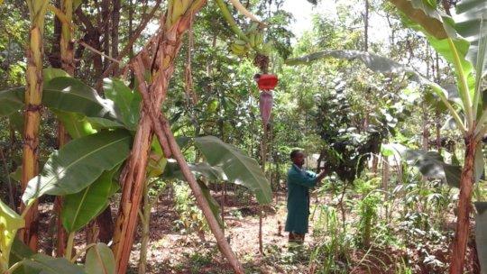 dnrc food forest