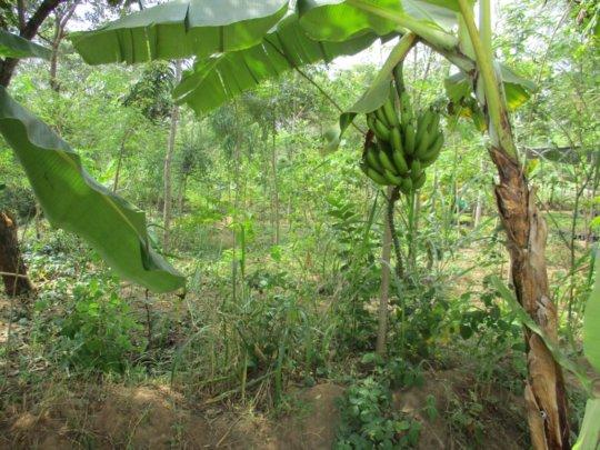 DNRC DEMO. FOOD FOREST