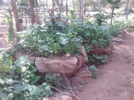 DNRC kitchen garden