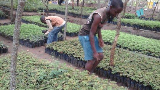 DNRC  nursery with Tree seedlings