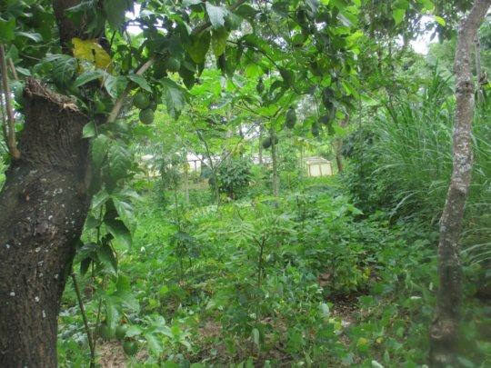 flourishing food forest