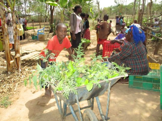 issuance of tree seedlings