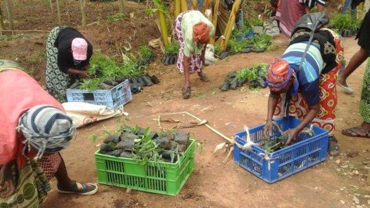 farmers picking tree seedlings