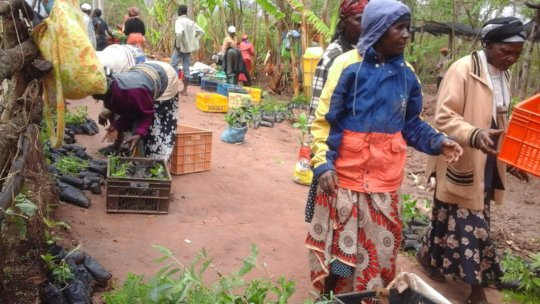more farmers picking tree seedlings