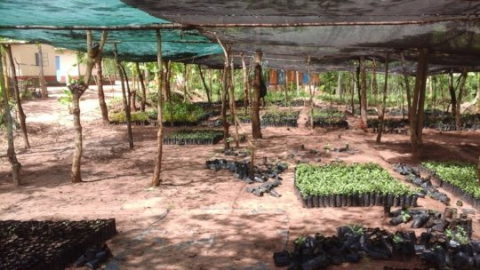 tree nursery after issuing the seedlings