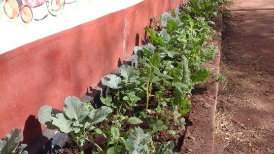 vegetables in dnrc gardens