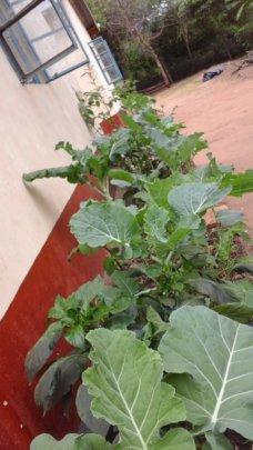 DNRC kitchen gardens
